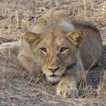 Foto di Jock Safari Lodge