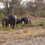 Photo de Jock Safari Lodge