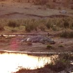Zdjęcie Jock Safari Lodge