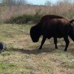 Photo de Paynes Prairie Preserve State Park
