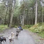Cart with up to 20 people are easily pulled through the woods and Dogs love the workout!