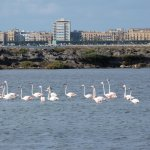 migrating flamingos on the lagoon behind the B&B
