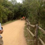 Heading east with senior biking group on southern loop of the Austin Hike and Bike Trail.