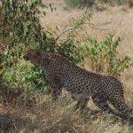 Maasai Mara Game Preserve
