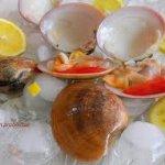 Conchas fina. Tipicas de Malaga
