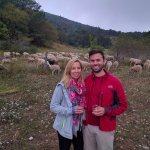 Sheep wrangling... with wine