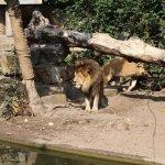 Photo of Artis Zoo