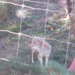 Colorado Wolf and Wildlife Center Foto