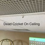 Dead cricket hanging from the ceiling.