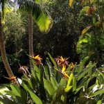 Na Aina Kai Botanical Gardens Foto