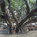 Foto de Banyan Tree Park