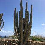 Foto de De Palm Tours