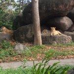 Bilde fra Mara River Safari Lodge