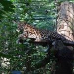 Dortmund Zoo Foto
