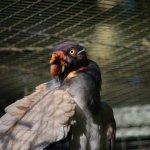 Zoo de Dortmund