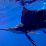 Foto de Reefers Diving
