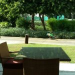 Peacock roaming around outside our room and near the tennis courts.