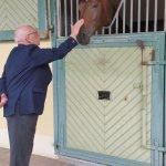 le cheval éternel ami de l'Homme