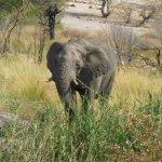 Ein Wüstenelefant vor der Lodge