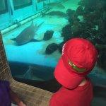 Foto di Clearwater Marine Aquarium