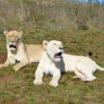 Botlierskop Private Game Reserve Foto
