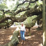 Angel Oak Tree Photo