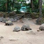 Seychelles National Botanical Gardens Foto