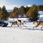 Pirineus de Lleida - Chiens de traineau - Lles de Cerdanya - Photo par Oriol Clavera