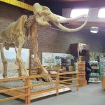 Foto de Mammoth Site of Hot Springs
