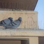 Foto di Trident,  Jaipur
