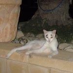 Foto di Leonardo Inn Hotel Dead Sea