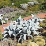 Aloes at the Royal Botanical Gardens