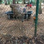 Busch Wildlife Sanctuary Foto