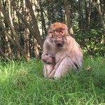 Foto de Trentham Monkey Forest