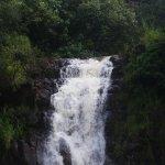 Foto de Waimea Valley