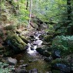 Nationalpark Harz Foto