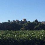 Across one Chateauneuf-du-Pape Vineyard.