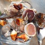 shells....none live