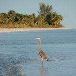 heron on the sandbar at beach