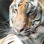 Photo de Big Cat Habitat and Gulf Coast Sanctuary