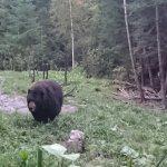 Super expérience d'observation d'ours aux berges St Maurice !! Guide super sympa, on apprend ple