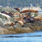 Foto di Puget Sound Express - Day Trips