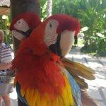 Foto de Bali Bird Park