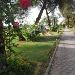 Nile walk