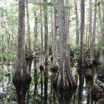 Everglades - Touring
