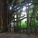 Banyan Tree you come across on your way to the falls