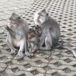 Well-behaved monkeys!