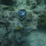 My Pics on my 2nd dive