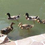 les fameux canards malins