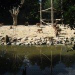les singes sur l'ile
